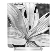 Lily White - Bw Shower Curtain