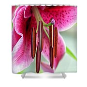 Lily Wishes Shower Curtain