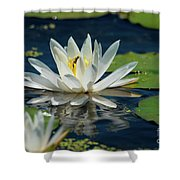 Lily With Bee Shower Curtain