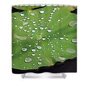 Lilypad Shower Curtain