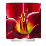 Lily's Way Shower Curtain