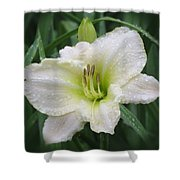 Lime Frost - Daylily Shower Curtain