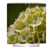 Lime Hydrangea Shower Curtain