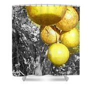 Lime Tree Shower Curtain
