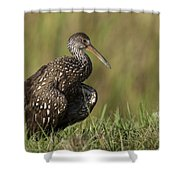 Limpkin Stretching In The Grass Shower Curtain