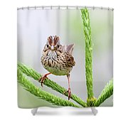 Lincoln's Sparrow Shower Curtain