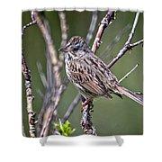 Lincoln's Sparrow Shower Curtain