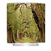 Line Of Oak Trees To Distance Shower Curtain