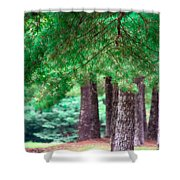 Line Of Pines Shower Curtain