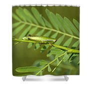 Linear Winged Grasshopper Shower Curtain