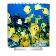 Lined Butterflyfish Shower Curtain