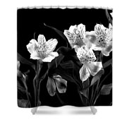 Lined Up Shower Curtain by Diane Reed
