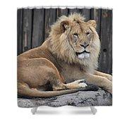 Lion 2 Shower Curtain