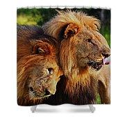 Lion 22 Shower Curtain