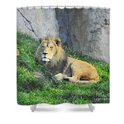 Lion At Leisure Shower Curtain
