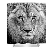 Lion Bw Shower Curtain