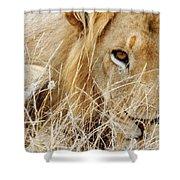 Lion Considering Irish Tartare Shower Curtain