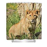 Lion Cub 2 Shower Curtain