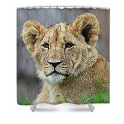 Lion Cub Close Up Shower Curtain