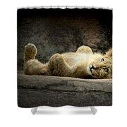 Lion Cub Shower Curtain