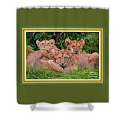 Lion Cubs. L A With Decorative Ornate Printed Frame. Shower Curtain