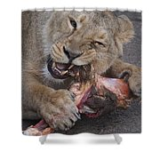 Lion Eating Shower Curtain