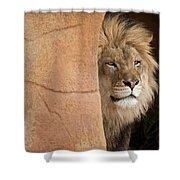 Lion Emerging    Captive Shower Curtain