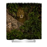 Lion In A Tree-signed Shower Curtain