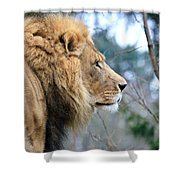 Lion In Thought Shower Curtain