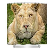Lion Nature Wear Shower Curtain