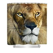 Lion Of Judah II Shower Curtain