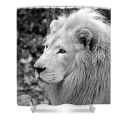 Lion Oh My Shower Curtain