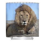 Lion On Mound Shower Curtain