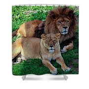 Lion Pair Shower Curtain