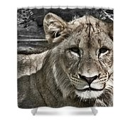 Lion Portrait Shower Curtain