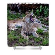 Lion Roar/2 Shower Curtain