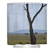 Lion Under Tree Shower Curtain