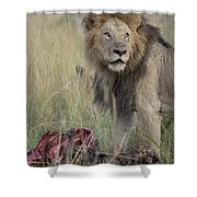 Lion With Kill Shower Curtain