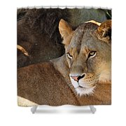 Lioness 3 Shower Curtain