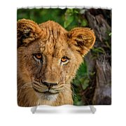 Lioness Cub Shower Curtain