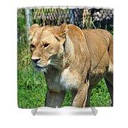Lioness Shower Curtain