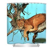 Lioness In Africa Shower Curtain