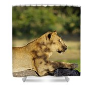 Lioness Pose Shower Curtain
