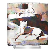 Lionesses At Zoo Shower Curtain