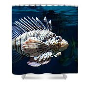 Lionfish Shower Curtain