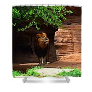Lions And Tigers And...no Just A Lion Shower Curtain