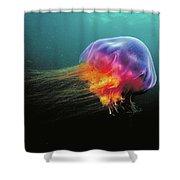 Lions Mane Cyanea Capillata Jellyfish Shower Curtain