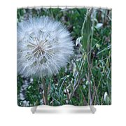Lion's Tooth Shower Curtain