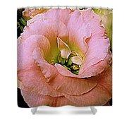 Lisianthus Bloom 2 Shower Curtain