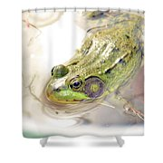 Lithobates Catesbeianus Or Rana Catesbeiana Shower Curtain